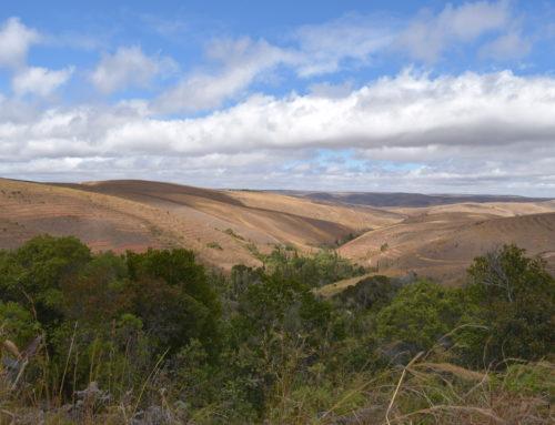 LA'BiO! schützt mit Naturefund den letzten Hochlandwald von Madagaskar