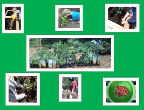 Pflanzenspende an den katholischen Kindergarten ST. REMIGIUS