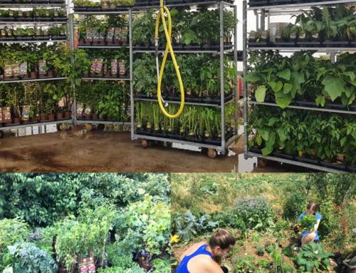 LA`BiO! spendet Pflanzen an Naturefund e.V.
