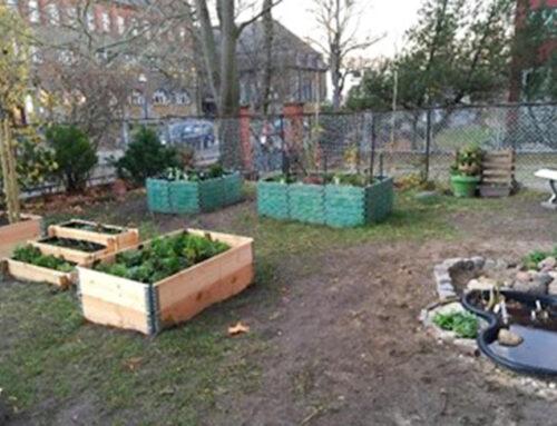 Tolle Bilder aus dem Schulgarten der Süd- Grundschule Zehlendorf