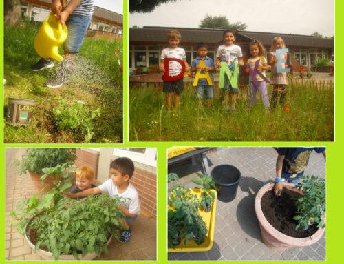 Pflanzenspende – Kath. Kindergarten St. Dionysius Doveren