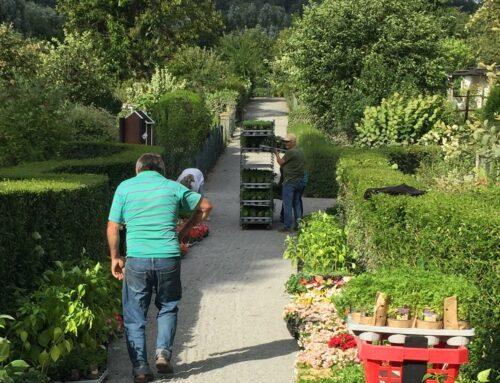 Pflanzenspende: Kleingartenanlage an der Mintarderstraße in Mülheim NRW